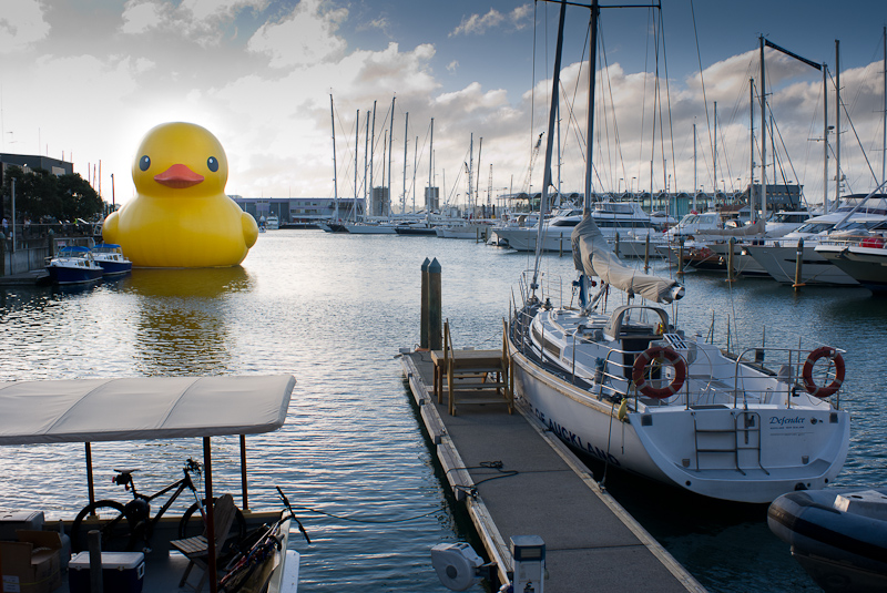 Yellow Duck in Auckland Harbour